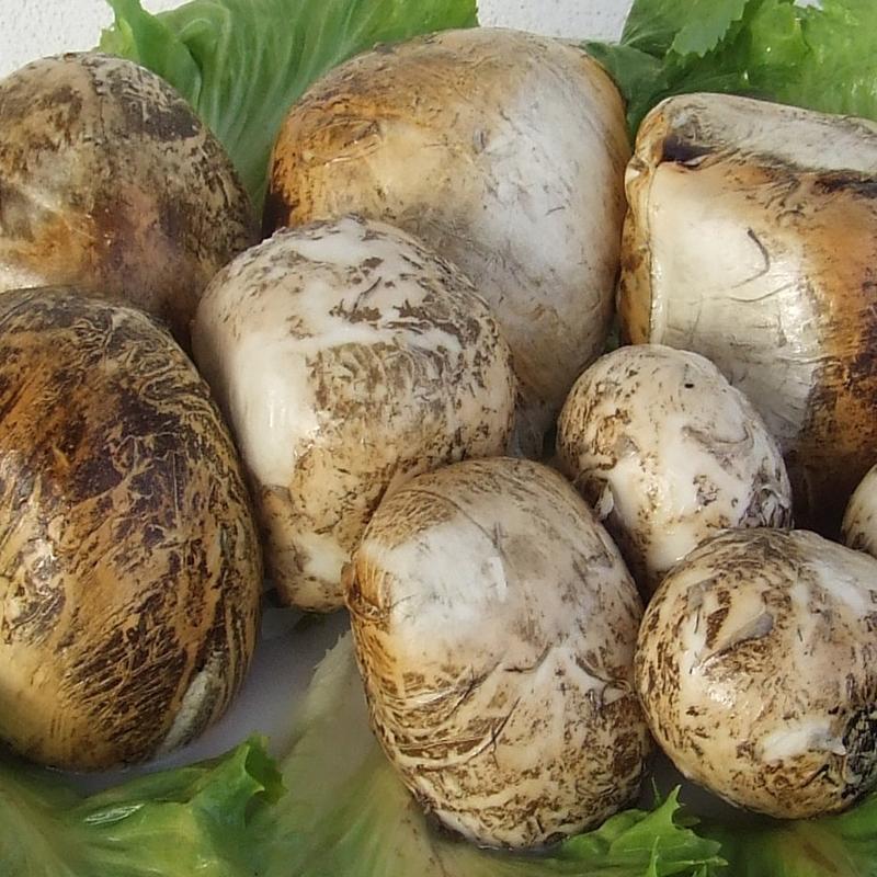 Bocconcini affumicati di Bufala 500 Gr.