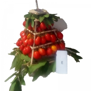 Vesuvius Piennolo tomato in Vesuvius bell - Available from July 2019